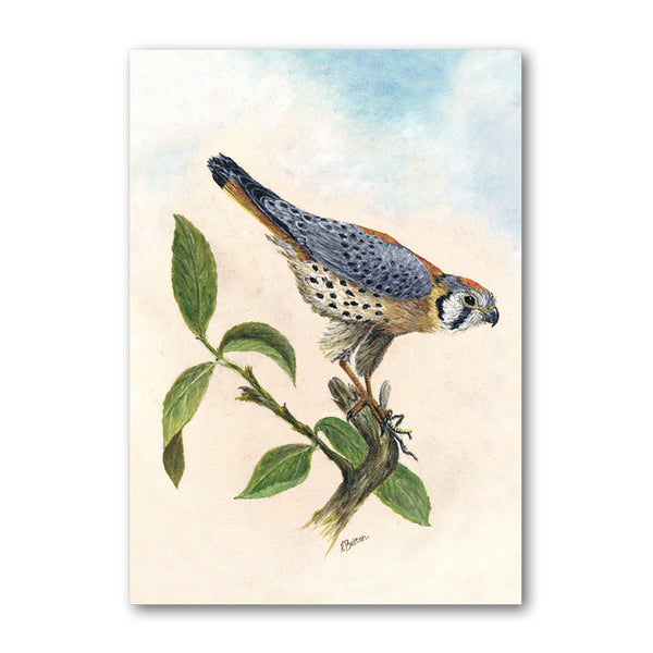 Peregrine Falcon Greetings Card from Dormouse Cards