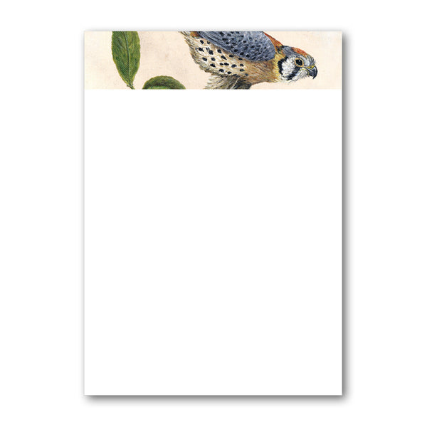 Pack of 6 A5 Peregrine Falcon Notepaper from Dormouse Cards