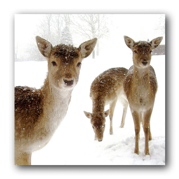 Wildlife Christmas Cards.Snow Deer Christmas Card