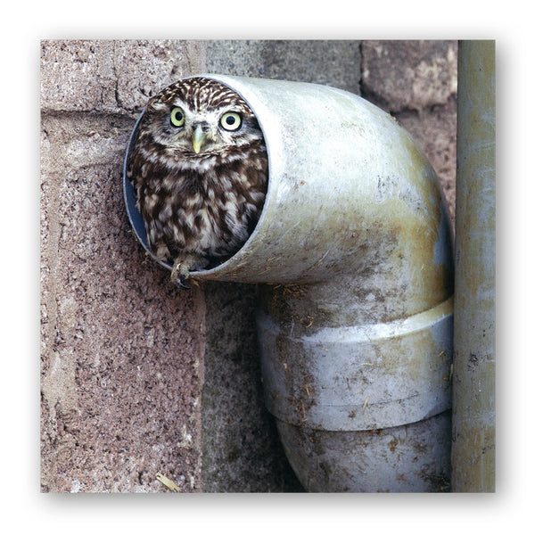 Little Owl Greetings Card from Dormouse Cards