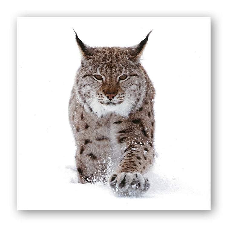 Eurasian Lynx Christmas Card from Dormouse Cards