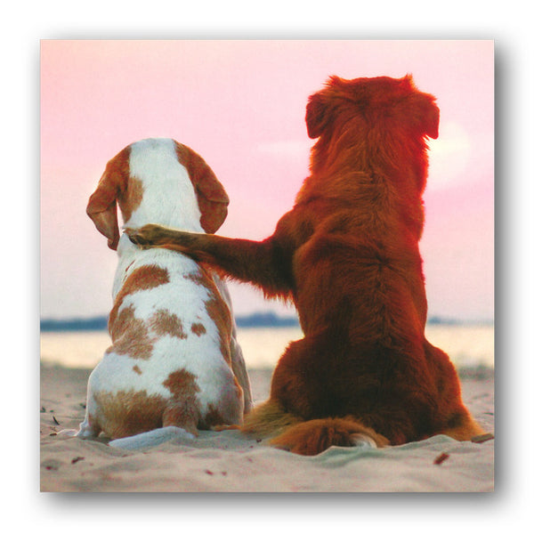 Beagle and Nova Scotia Duck Tolling Retriever Greetings or Birthday Cards from Dormouse Cards