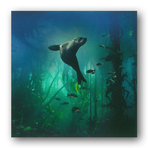BBC earth Galapagos Sea Lion Greetings Card from Dormouse Cards