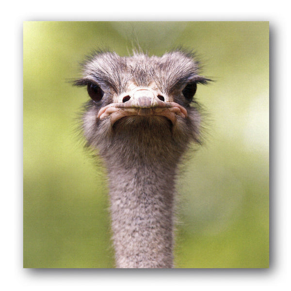 Ostrich Greetings Card from Dormouse Cards