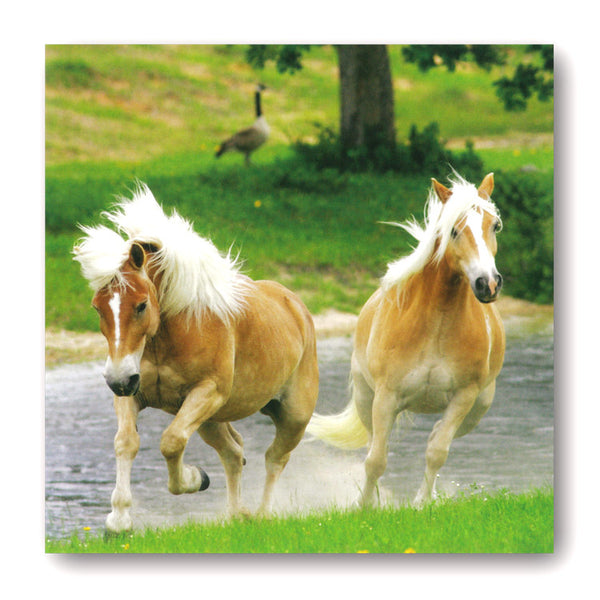 Haflinger Horses Greeting / Birthday Card from Dormouse Cards