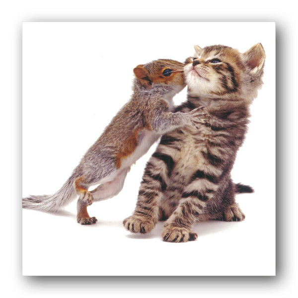 Funny Squirrel and Kitten Birthday Greetings Card buy online from Dormouse Cards