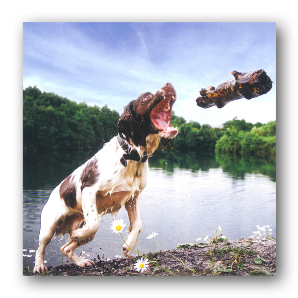 Springer Spaniel Birthday Greetings Card buy online from Dormouse Cards