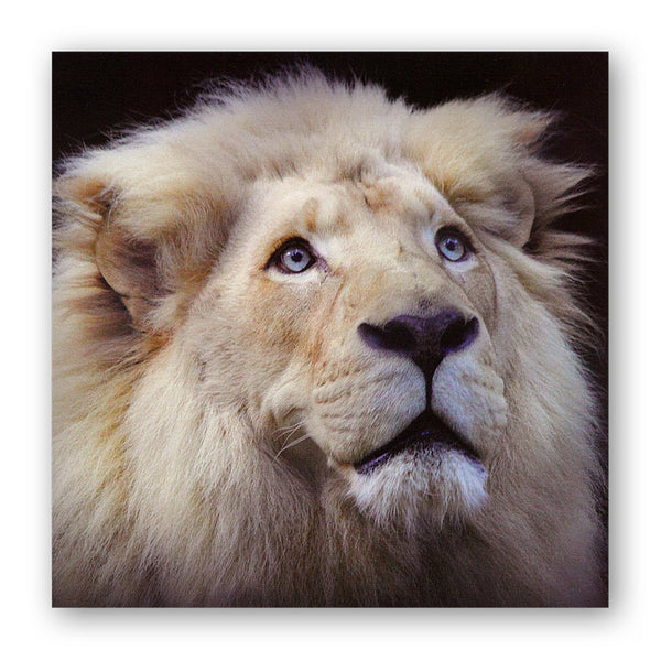 White Lion Greetings Card from Dormouse Cards