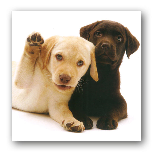 Labrador Puppies Birthday Greetings Card buy online from Dormouse Cards