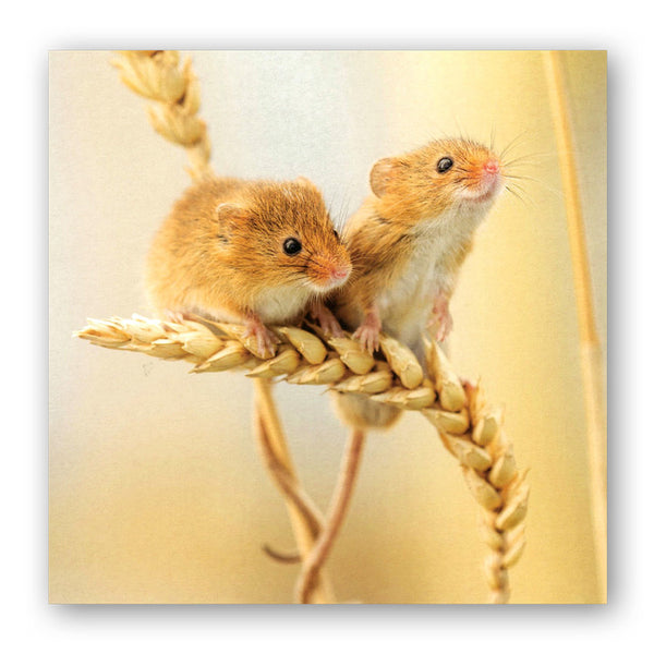 Harvest Mice Greetings Card from Dormouse Cards