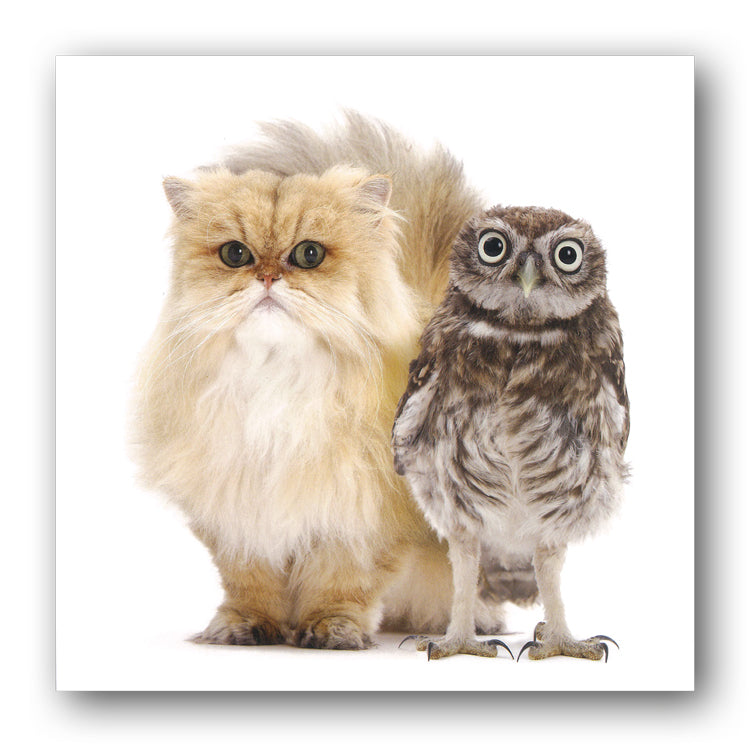 Persian Cat and Little Owl Birthday Greetings Card buy online from Dormouse Cards