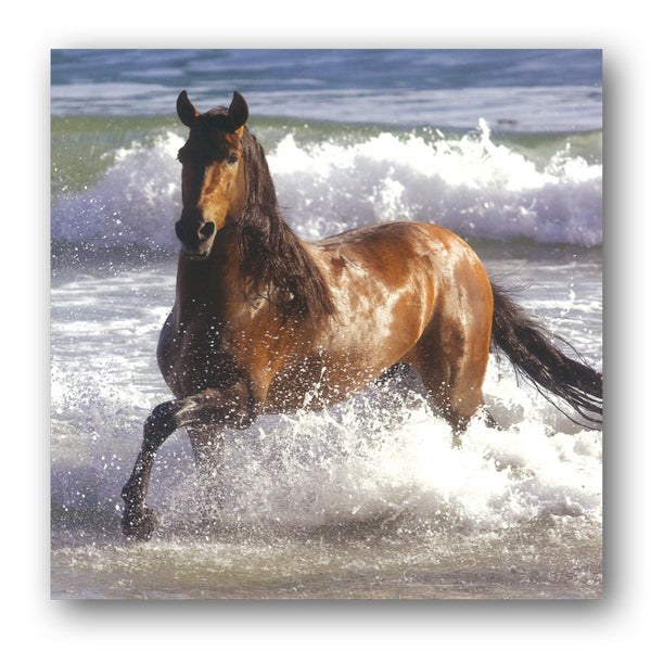 Andalusian Horse Birthday Greetings Card buy online from Dormouse Cards