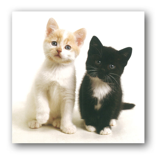 Kittens Birthday Greetings Card buy online from Dormouse Cards