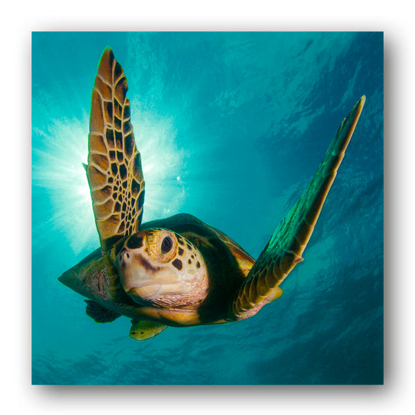 BBC earth Blue Planet II Green Turtle Greetings Card