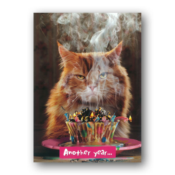 Funny Cat Birthday Card by Avanti from Dormouse Cards