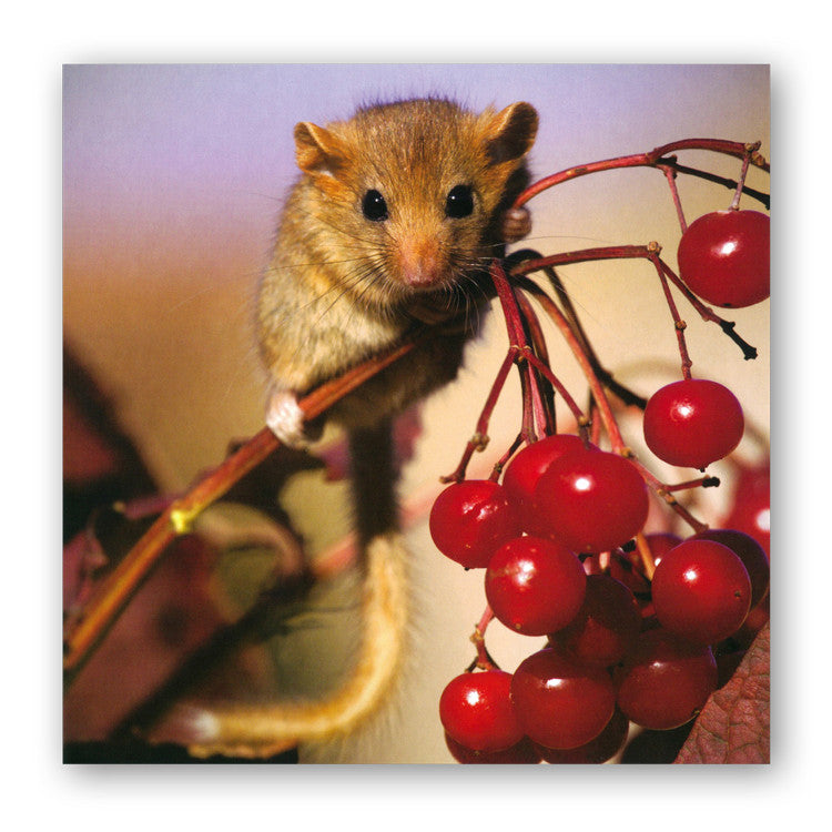 Dormouse Greetings Card from Dormouse Cards