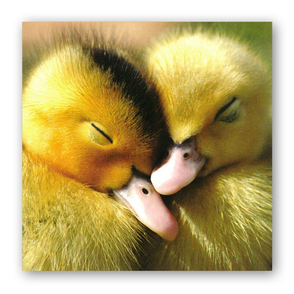 Muscovy Ducklings Greetings Card from Dormouse Cards