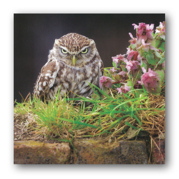 Little Owl Greetings / Birthday Card from Dormouse Cards