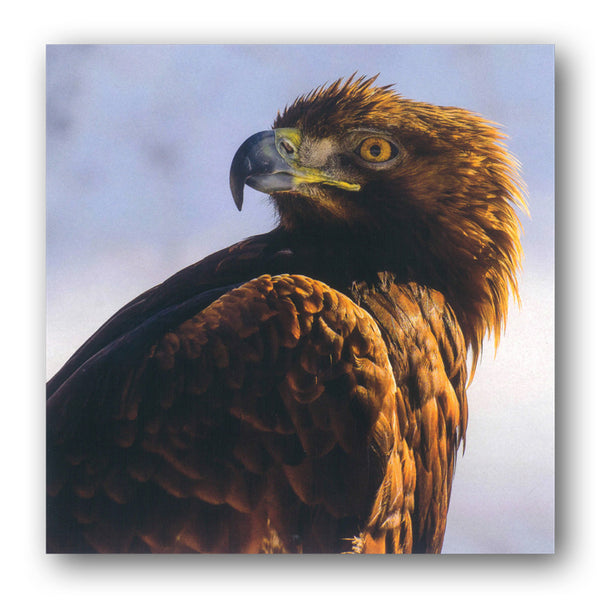 BBC earth Planet Earth II Golden Eagle French Alps Greetings Birthday Card from Dormouse Cards