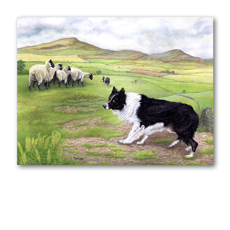 Sheepdog Father's Day from Dormouse Cards