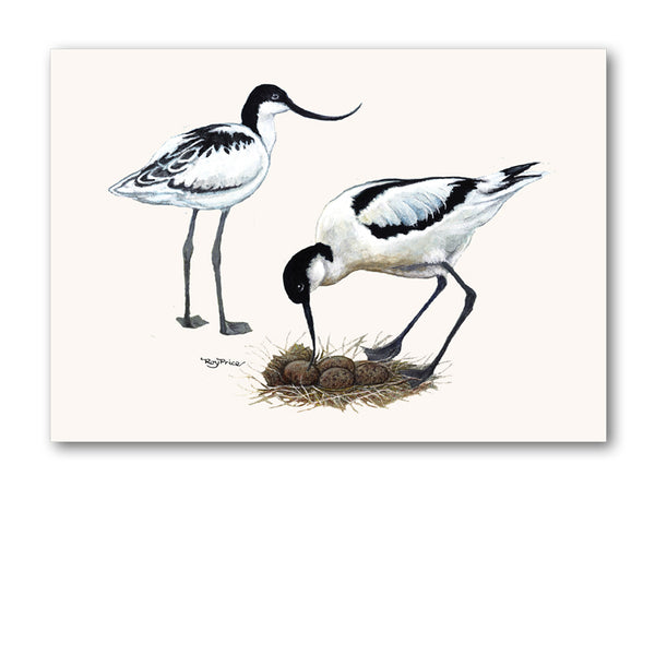 Avocet Greetings Card from Dormouse Cards