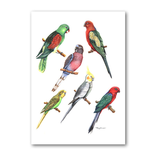 Pack of 10 Exotic Birds Postcards from Dormouse Cards