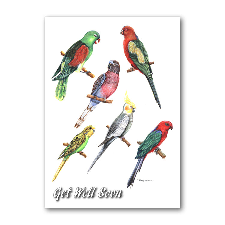Exotic Birds Get Well Soon Card from Dormouse Cards
