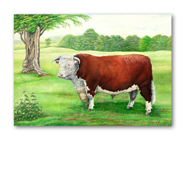 Pack of 5 Hereford Bull Notelets from Dormouse Cards