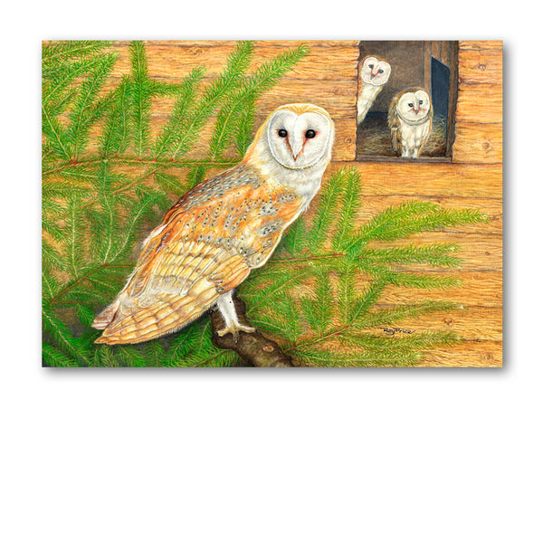 Pack of 5 Barn Owl Notelets from Dormouse Cards