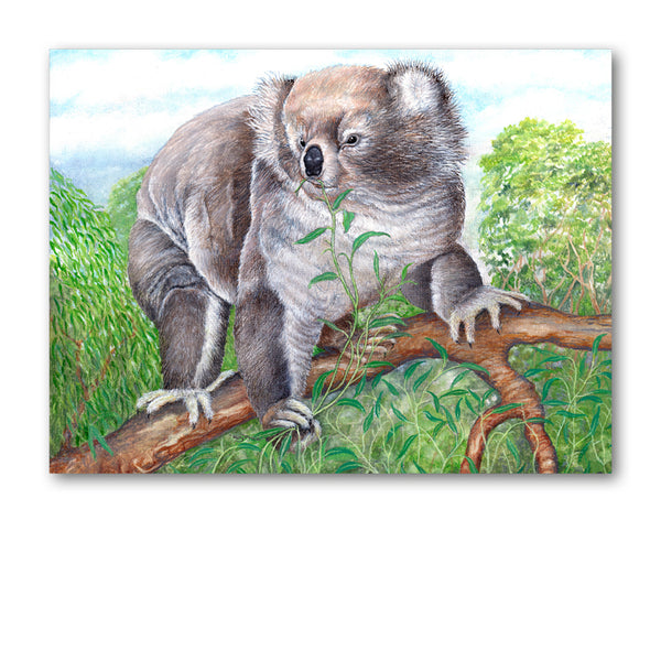 Pack of 5 A6 Koala Bear Notelets from Dormouse Cards