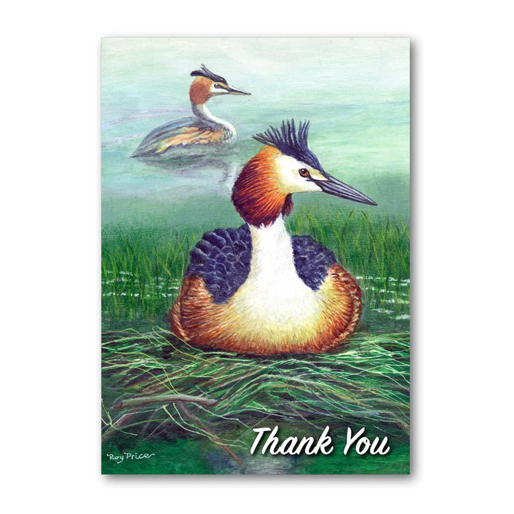 Great Crested Grebe Thank You Card from Dormouse Cards