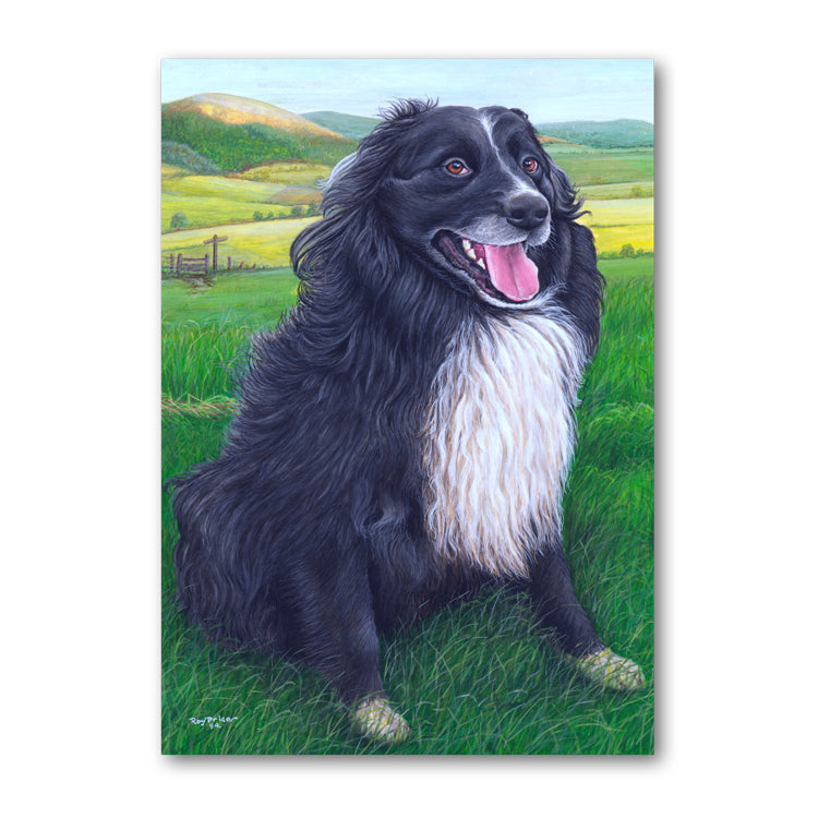 Mitch the Sheepdog on Offa's Dyke Path Powys Wales Mother's Day Card from Dormouse Cards