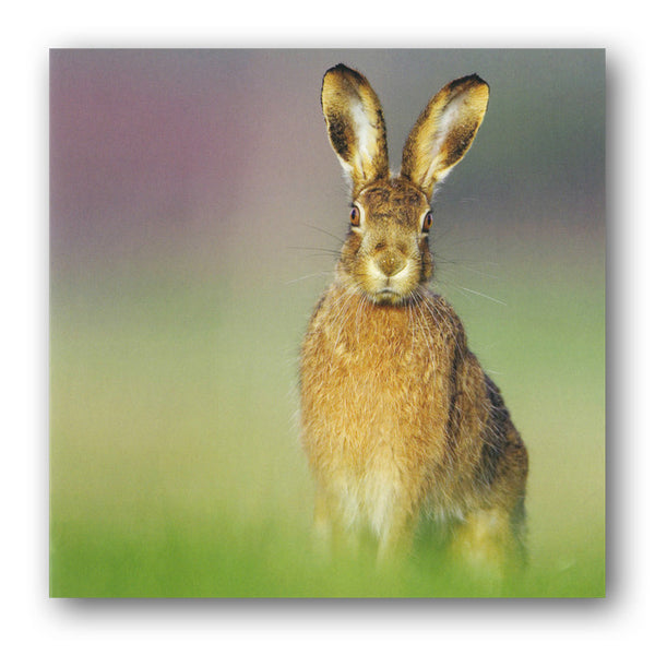 Brown Hare Greetings / Birthday Card from Dormouse Cards