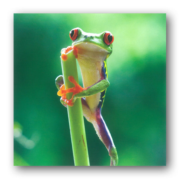 BBC earth Planet Earth II Red Eyed Frog Greetings Card from Dormouse Cards