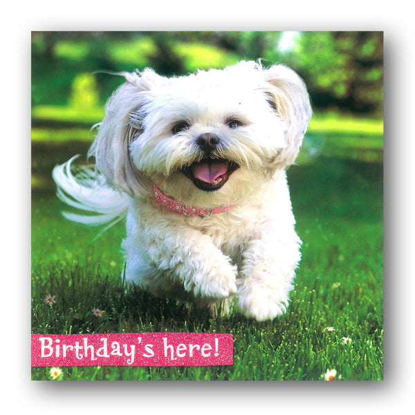Funny Dog Birthday Card by Avanti from Dormouse Cards