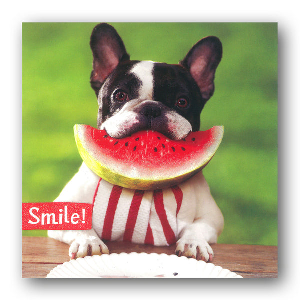 Funny Dog Eating Watermelon Birthday Card by Avanti from Dormouse Cards