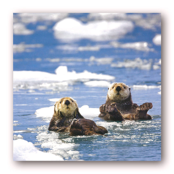 Sea Otters Greetings / Birthday Cards from Dormouse Cards