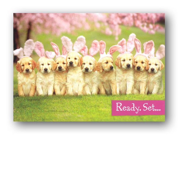Funny Easter Card - Golden Retriever Puppies with Bunny Ears by Avanti from Dormouse Cards