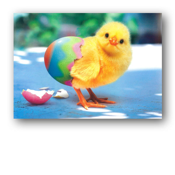 Cute Funny Chick Easter Card by Avanti from Dormouse Cards