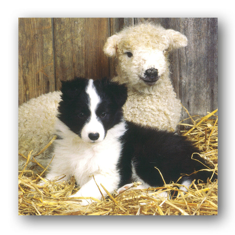 Border Collie Puppy and Lamb Greetings Card from Dormouse Cards