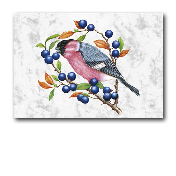 Pack of 5 Bullfinch Marble Notelets