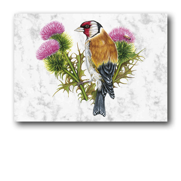 Goldfinch Marble Postcards from Dormouse Cards