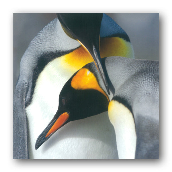BBC eart King Penguins Greetings Card from Dormouse Cards
