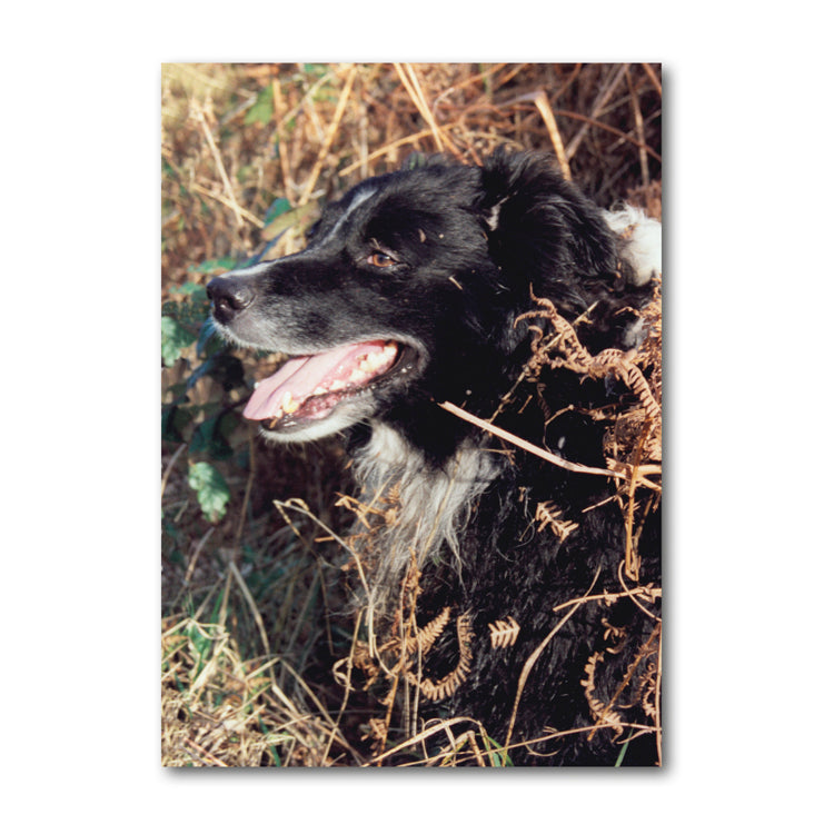 Sheepdog Border Collie Notelets from Dormouse Cards