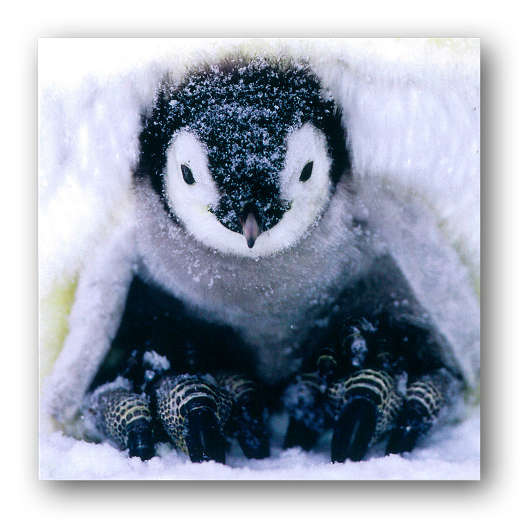 Emperor Penguin Chick Christmas Card from Dormouse Cards