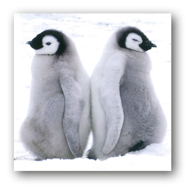 Two Emperor Penguin Chicks Christmas Card from Dormouse Cards