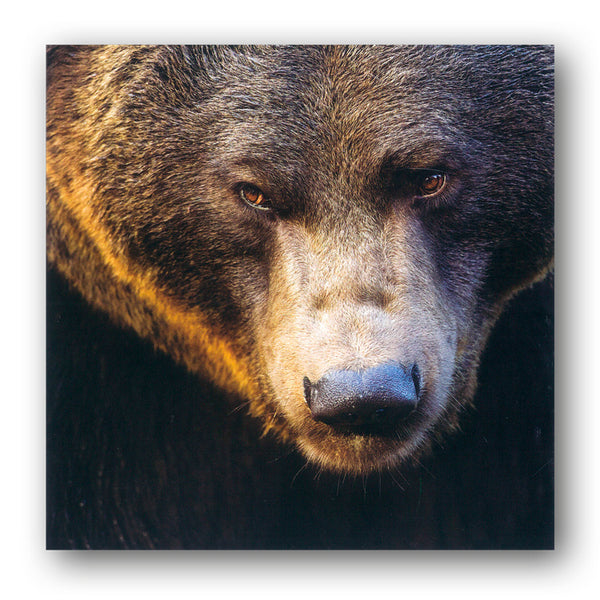 Eurasian Brown Bear Greetings Card from Dormoue Cards