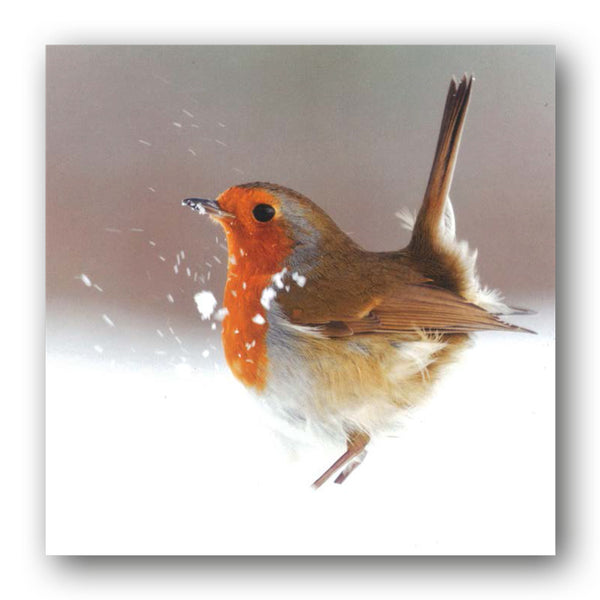 Robin Christmas Card from Dormouse Cards
