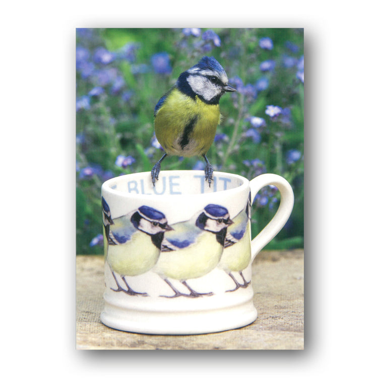 Blue Tit on Cup Greetings Card from Dormouse Cards