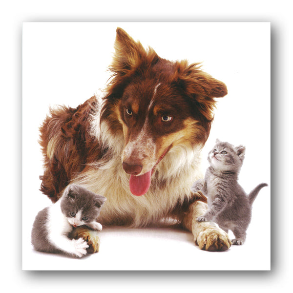 Border Collie and Playful Kittens Greetings Card from Dormouse Cards